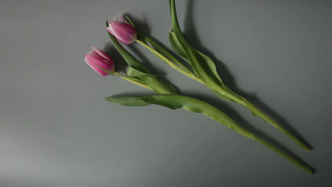 Bouquet of Tulips Footage