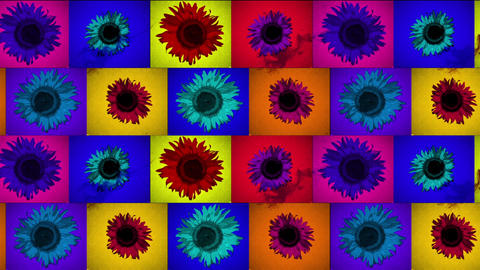 Colourful Flower Animation
