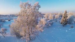 Snowfall. Sunset. Winter landscape Footage