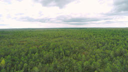 Aerial footage. Flight Over Swamp. Nature landscape Footage