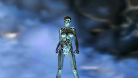 Digital 3D Animation of the female human Anatomy CG動画素材