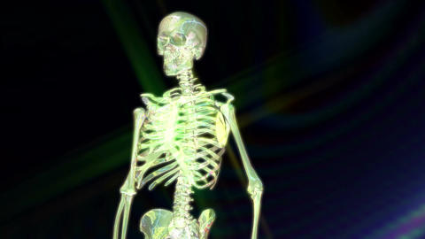 Digital 3D Animation of a human Skeleton Animation