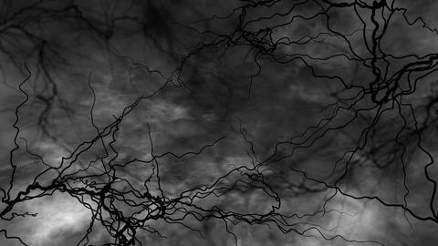 SHA Blood Vessel Image White Animation