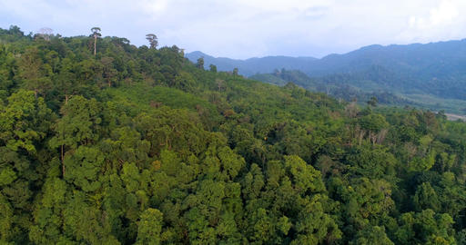 Top view of the hills covered with jungle. Thailand. Aerial Footage