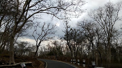 Dry Trees Footage