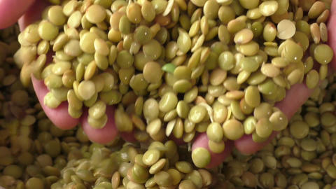 Closeup of soaked soft lentil with selective focus Footage