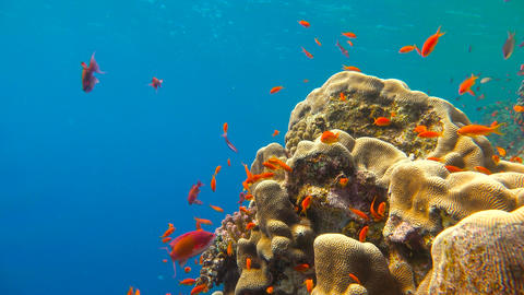 Diving in the Red sea near Egypt. Gorgeous colorful coral reef GIF