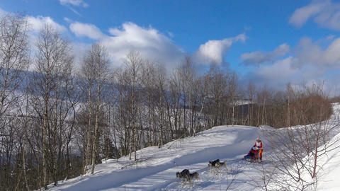 Dog-sled race. The Caucasus. Russia Footage