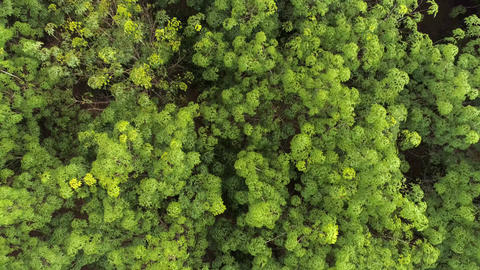 Tropical forest. Top view. Aerial. Thailand Footage