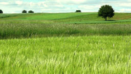 green landscape Footage