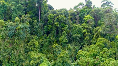 Tropical forest. Go backwards. Aerial. Thailand Footage