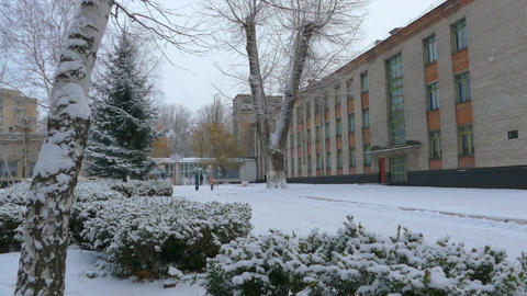 Winter in Ukraine, snow, frost, Christmass tree