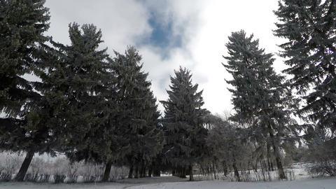 Winter Walk In The Botanical Garden Footage