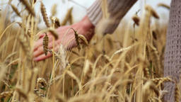 hand on wheat Footage