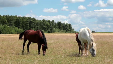 Horse And Foal On Pasture 2 Footage