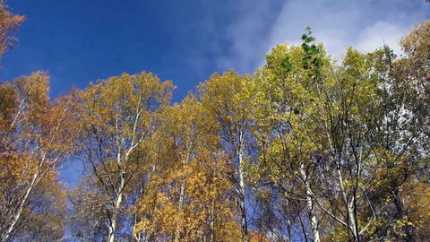 Deciduous forest in late autumn Footage