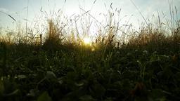 Morning Summer Meadow Footage