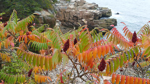 Autumn and colored leaves with ocean Footage