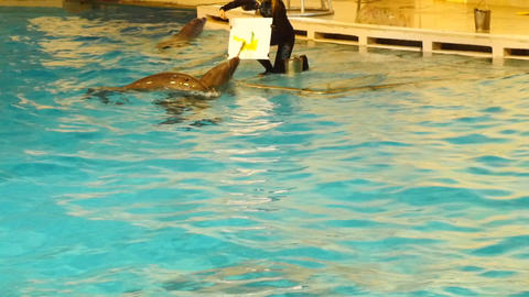 Smart trained dolphins paint a picture Footage