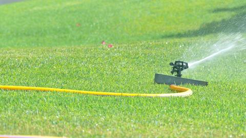 Video of sprinkler in the garden in 4k Footage
