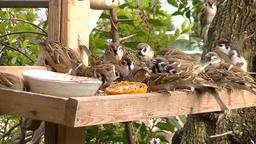 BirdFeed 120sec Footage
