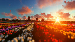 Traditional Dutch windmills with vibrant tulips in the foreground over sunset, p Animation