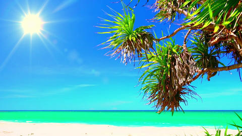 Beautiful landscape with tropical palm tree, white sand and azure sea Footage