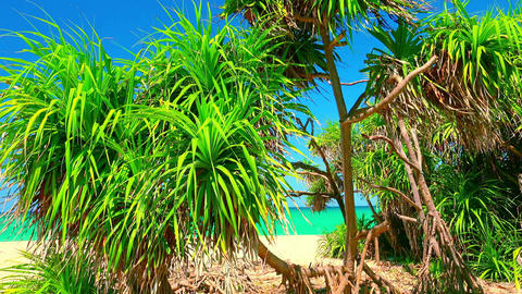 Relaxing view of palm tree foliage slightly trembling in wind Footage