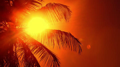 Setting sun shining through palm leaves swaying in wind Footage