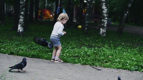 Little boy in shorts throws sunflower seeds to doves. Summer park. Childhood Footage