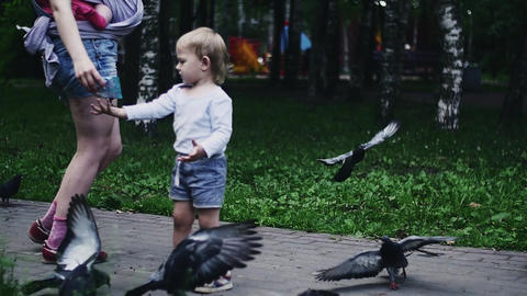 Blonde little boy feeding doves by sunflower seeds in summer park. Childhood Footage