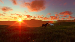 Two horses on green meadow, beautiful sunset Animation