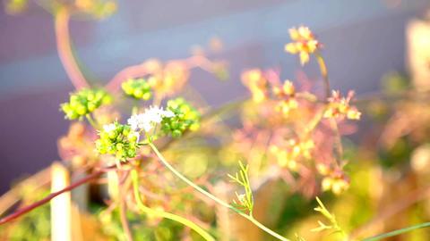 Plants in Spring Filmmaterial