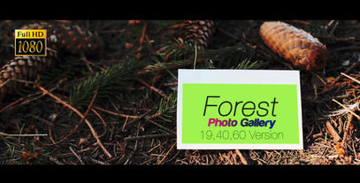 Forest Photo Gallery After Effects Template