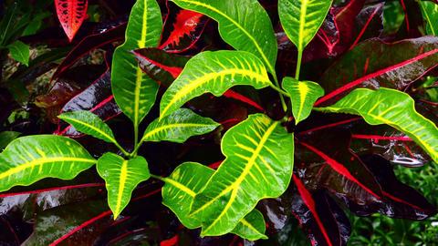 Wet season in tropics. Amazing plants and flowers in fantasy garden Live Action