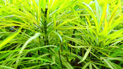 Abstract panning video of decorative plants growing in tropical garden Footage