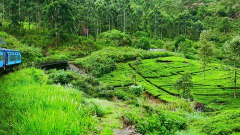 Train crossing bridge through tea plantation landscape in highlands. Sri Lanka Footage