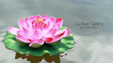 Lily River Photo Gallery After Effects Project
