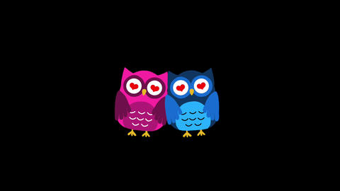 Two owl Animation