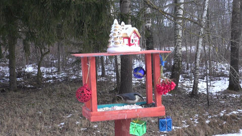 bird feeder with new year decorations and wild birds Live Action