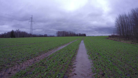 Field with young wheat and tractor tracks after autumn rain, time lapse 4K Footage