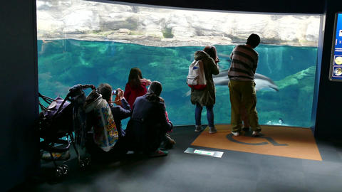 Dolphins Swimming And People At Osaka Aquarium In Japan Asia Footage