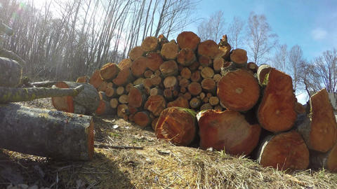Stack of cut alder trees, time lapse 4K Footage