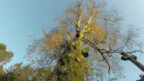 Old birch tree with bird nesting boxes and sunrise light, 4K time lapse Footage