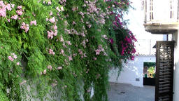Europe Spain Balearic Ibiza Eivissa city 157 hanging plants in old alley Footage