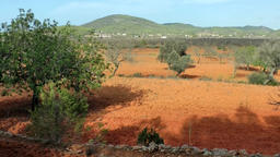 Europe Spain Balearic Ibiza coves and landscapes 200 almond and olive fields Footage