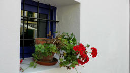 Europe Spain Balearic Ibiza village santa gertrudis 204 window, geranium flower Footage