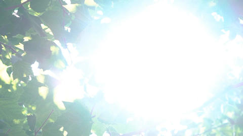 Tree Flare Sun Shine Footage