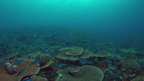 Coral reef with plenty fish 4k Footage