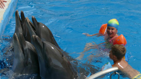 Children swim with dolphins in the pool Footage